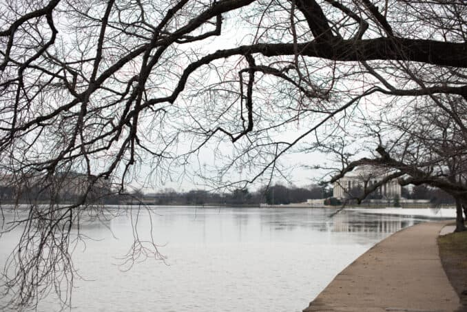 Washington DC Cherry Blossoms and Jefferson Memorial - February 7, 2016