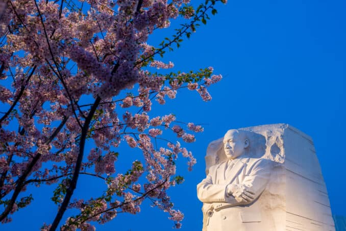 Washington DC Cherry Blossoms: April 13, 2014 - MLK Memorial