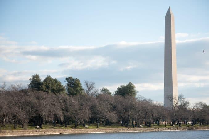 Washington DC Cherry Blossoms - March 2, 2016