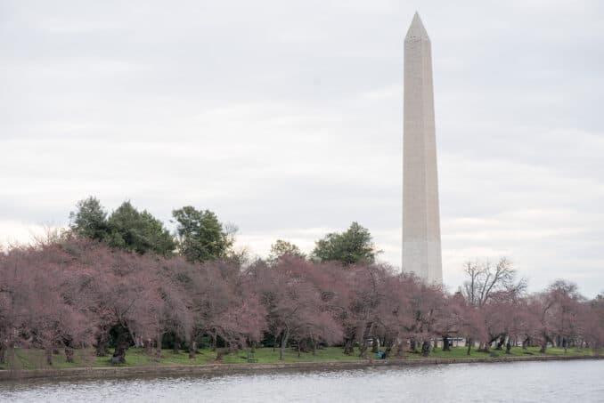 Washington DC Cherry Blossoms - March 20, 2016