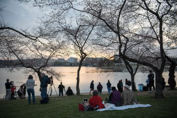 Washington DC Cherry Blossoms - March 23, 2016