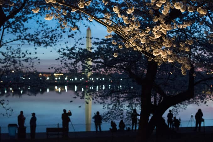 Washington DC Cherry Blossoms - March 24, 2016