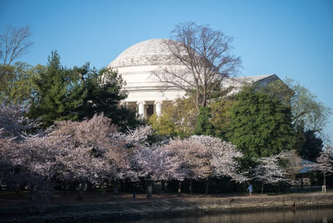 Washington DC Cherry Blossoms - March 30, 2016