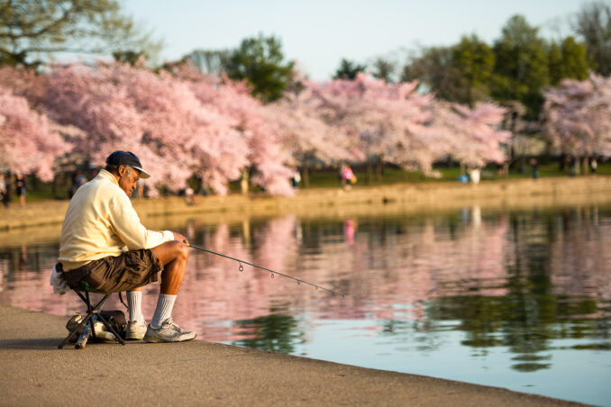 Cherry Blossoms in Washington DC with Fisherman