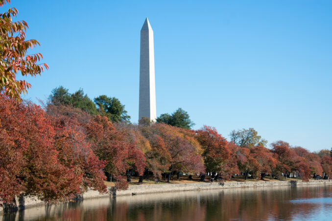 Washington DC Cherry Blossoms Fall 2016