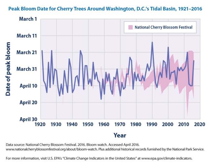 Climate Change and the Cherry Blossoms