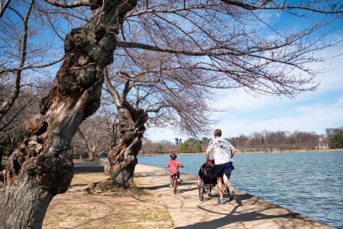Washington DC Cherry Blossoms - February 20, 2017