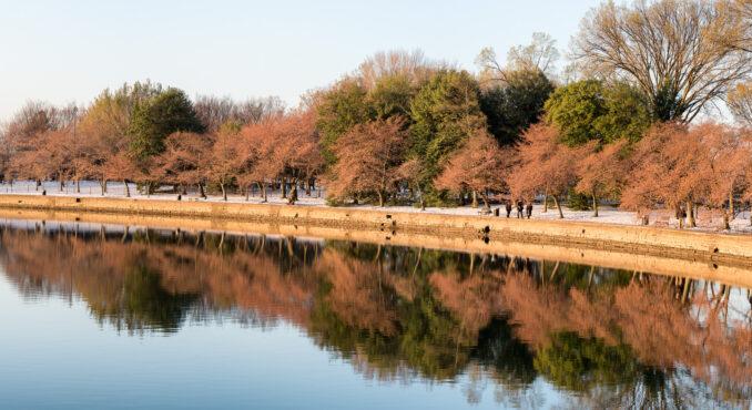 Washington DC Cherry Blossoms 2017 - March 17