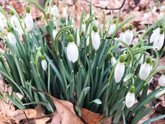 Spring Flowers - February 21, 2018