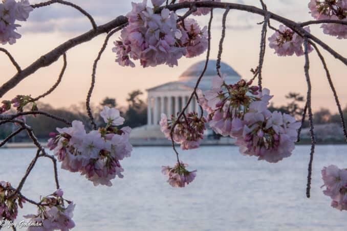 blossom view jefferson memorial 678x452 - Reader Photos 2018 | Part 1