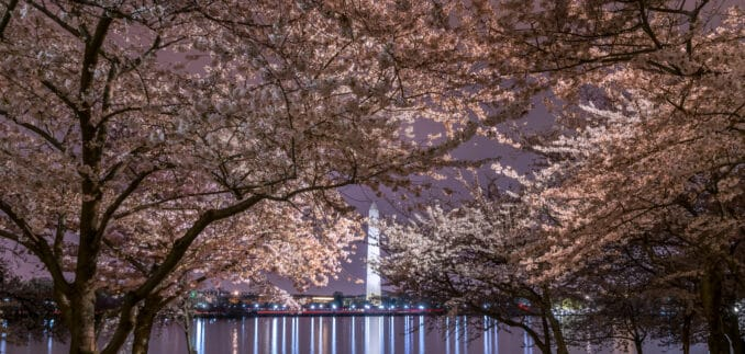cherry blossoms night 678x323 - Reader Photos 2018 | Part 4