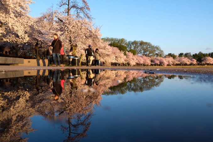 DC Cherry Blossom Watch Update: April 5, 2018