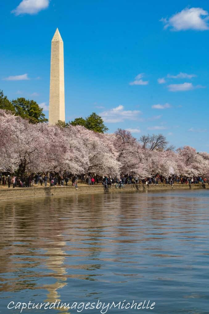 dc cherry blossoms 2018 25 678x1017 - Reader Photos 2018 | Part 4