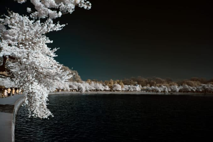 tidal basin ir northward view 678x452 - Reader Photos 2018 | Part 4