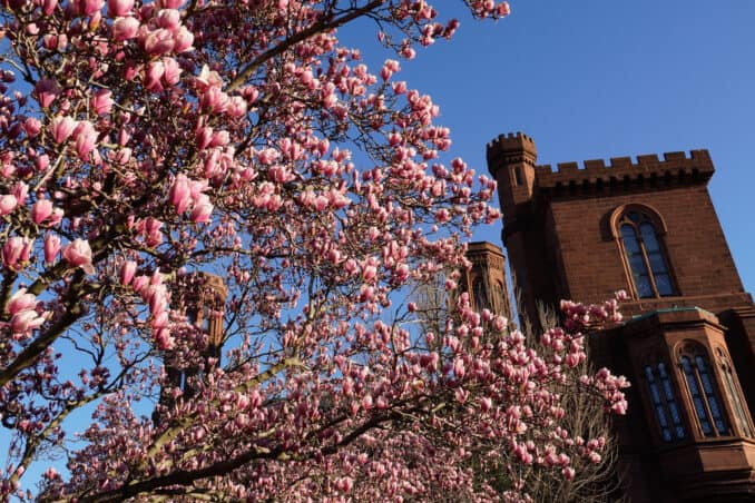 0024 082 071047884 678x452 - Cherry Blossom Watch Update: March 23, 2019