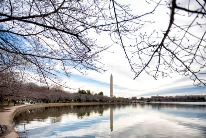 Washington DC Cherry Blossoms - March 11, 2019