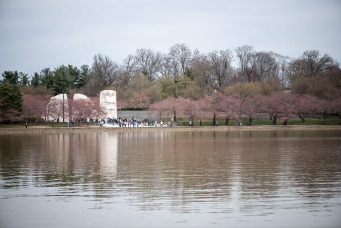 Washington DC Cherry Blossoms - March 25, 2019