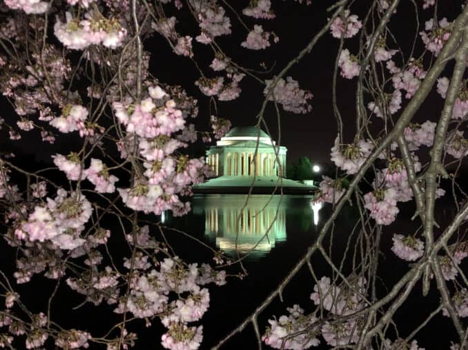 2019 03 29 hint jefferson memorial thru cherry trees 678x508 - Reader Photos 2019 | Part 1
