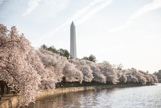 Washington DC Cherry Blossoms - April 2, 2019