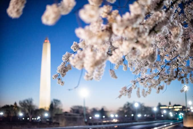 Washington DC Cherry Blossoms - April 3, 2019