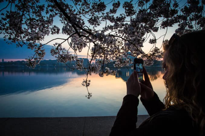 dc blossoms19 2 678x452 - Reader Photos 2019   Part 4