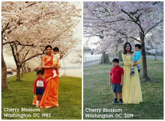 family cherry blossom 678x498 - Reader Photos 2019 | Part 3