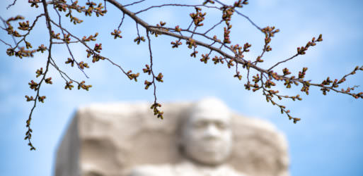 Photo of Washington DC Cherry Blossoms - March 23, 2021 taken by David Coleman.