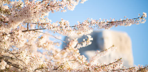 Photo of Washington DC Cherry Blossoms at the Tidal Basin - April 2, 2021 taken by David Coleman.